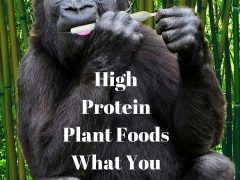 High Protein Plant Foods – What You Can Learn From A Gorilla