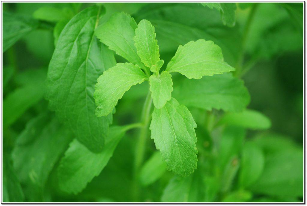 Can I Use Stevia