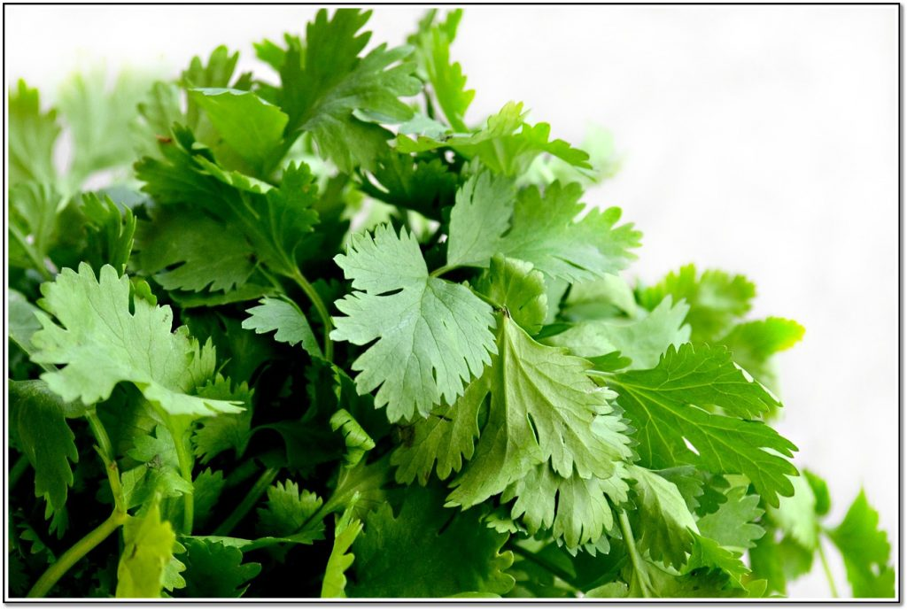 Vegetable Detox Cilantro