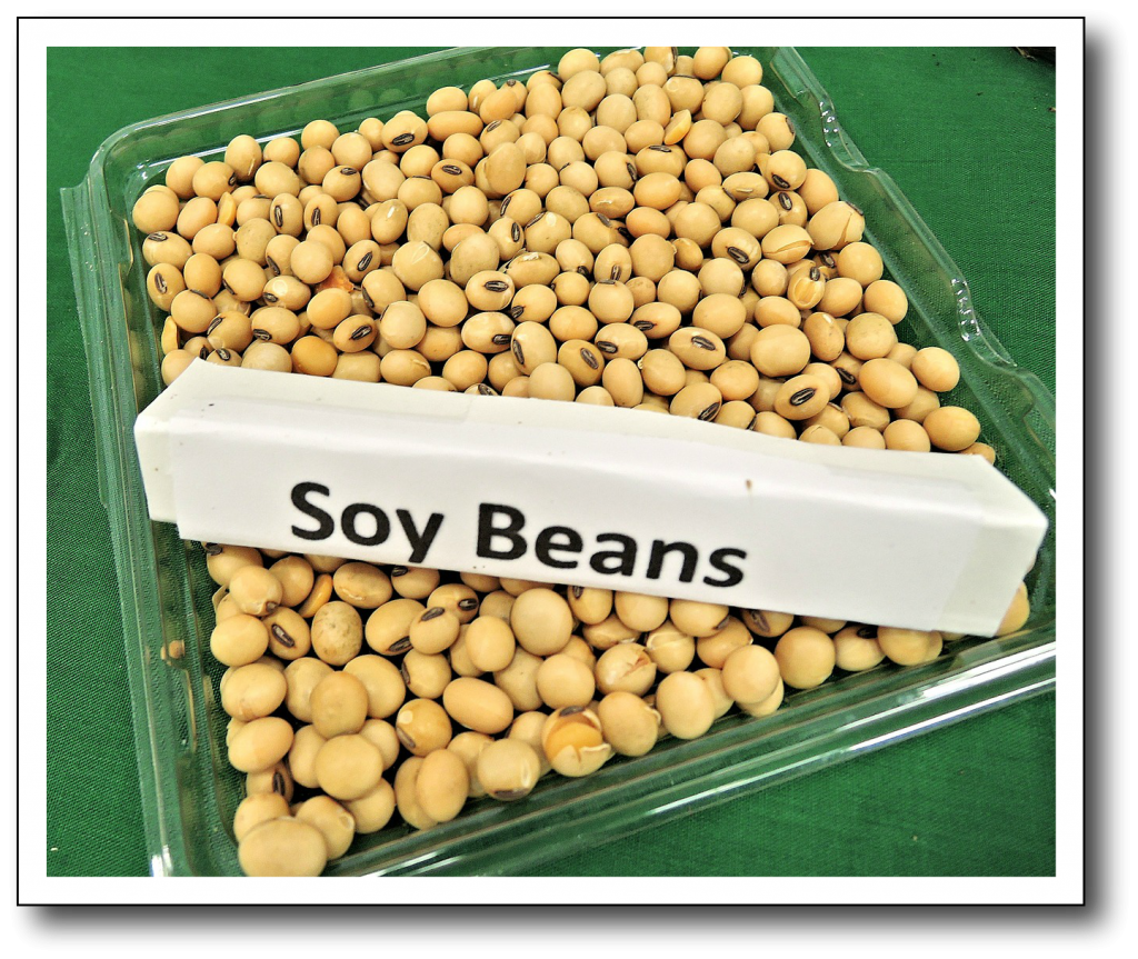 Diet for Menopause Hot Flashes Soy Beans