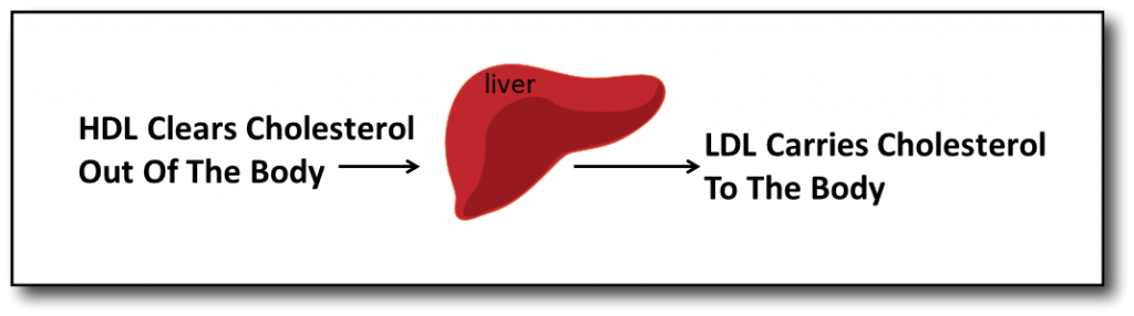 Understanding Cholesterol and Low Carb Diet HDL & LDL