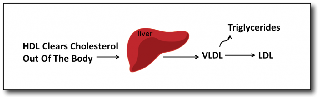 Understanding Cholesterol and Low Carb Diet VLDL to LDL
