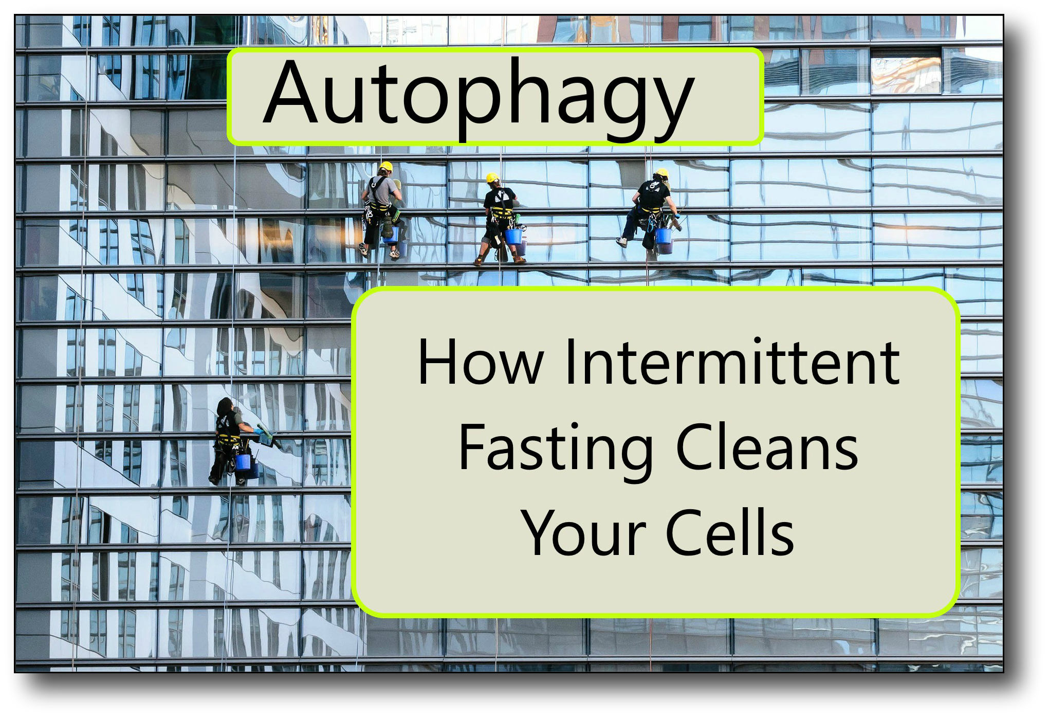 Intermittent Fasting and Autophagy feature