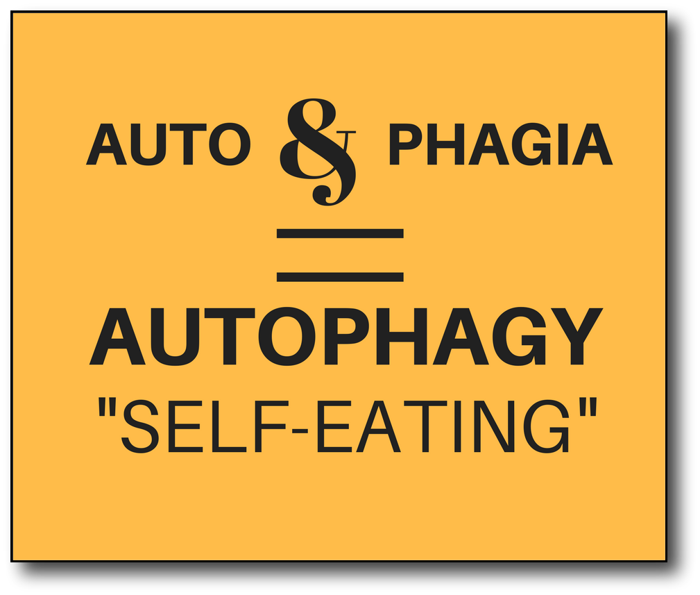 Intermittent fasting and autophagy - words