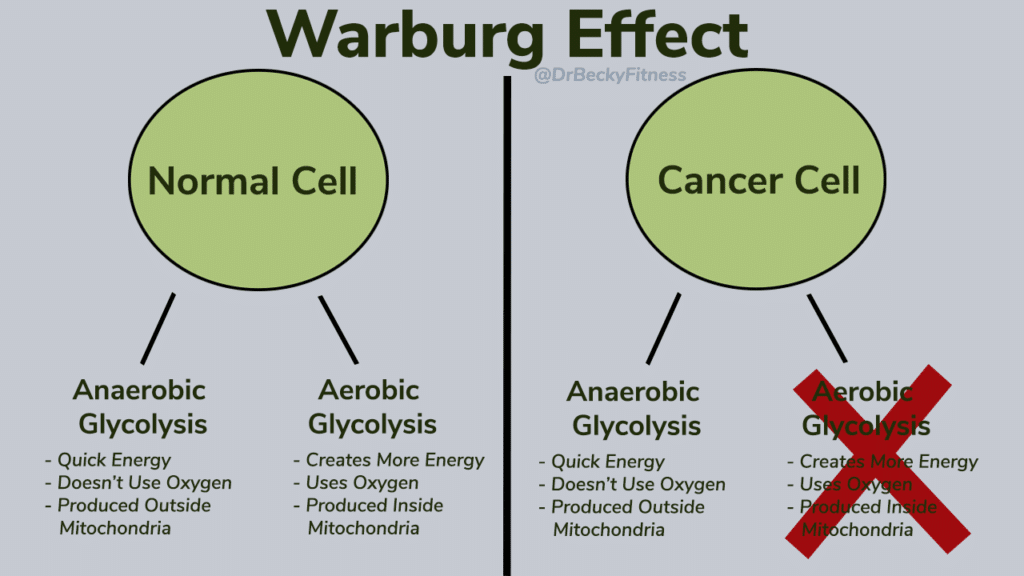 the Warburg effect
