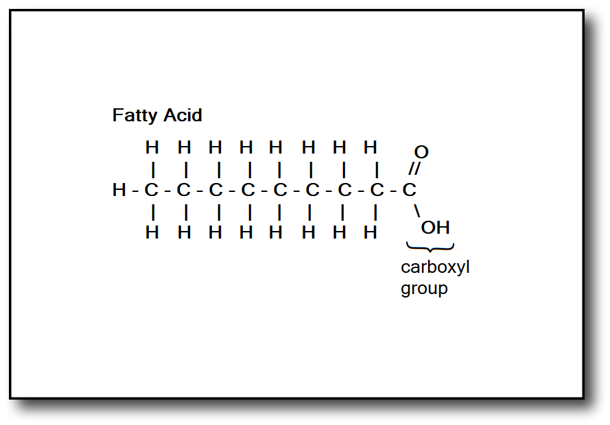 saturated fat molecule