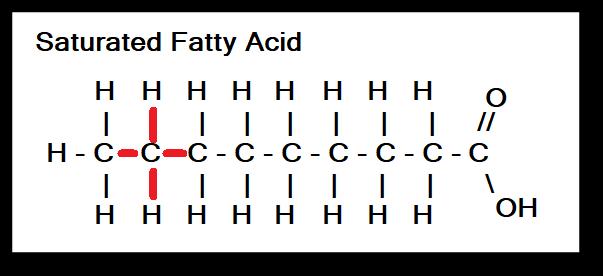 single bonds of saturated fatty acids